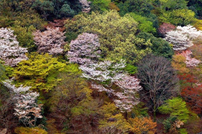 2007-04-29_Arashiyama_1_2007-04-09_11:51:38_small.jpg