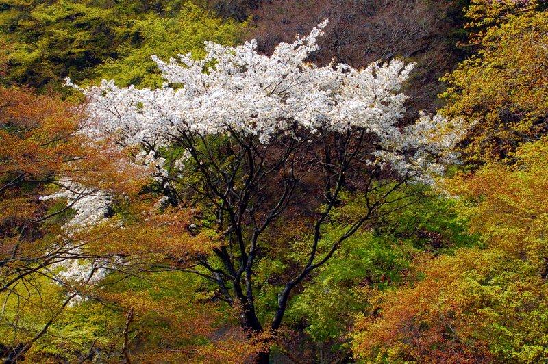 2007-04-29_Arashiyama_2_2007-04-09_09:39:23_small.jpg