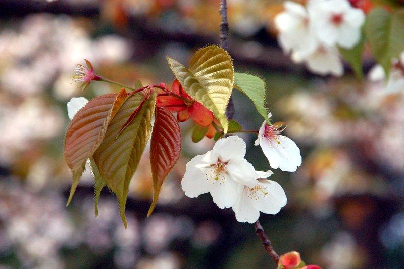 2007-04-29_Cherry_3_2007-04-08_13:33:29_small.jpg