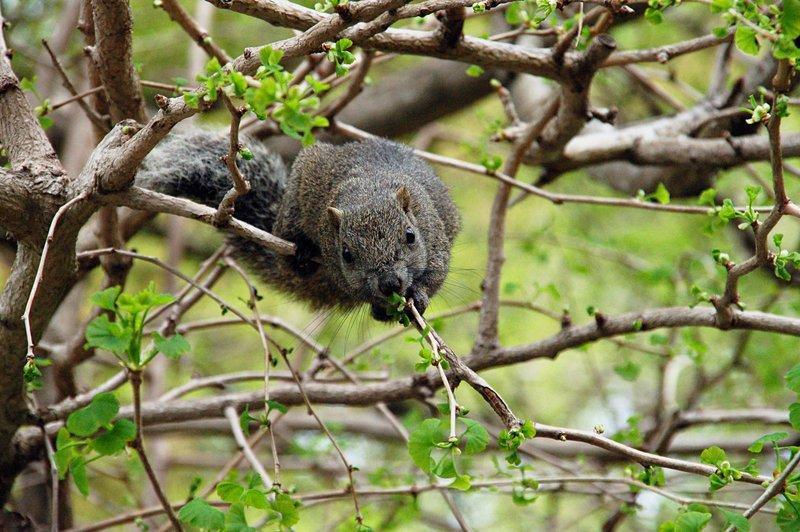 2007-04-29_Squirrel_2_Kamakura_2007-04-16_12:22:03_small.jpg