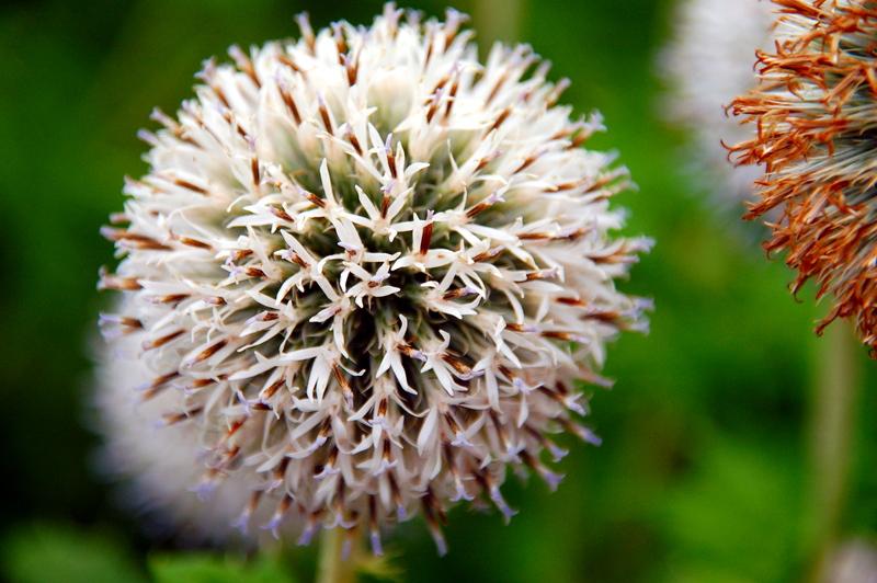 2008-09-23_Flowers_01_small.jpg