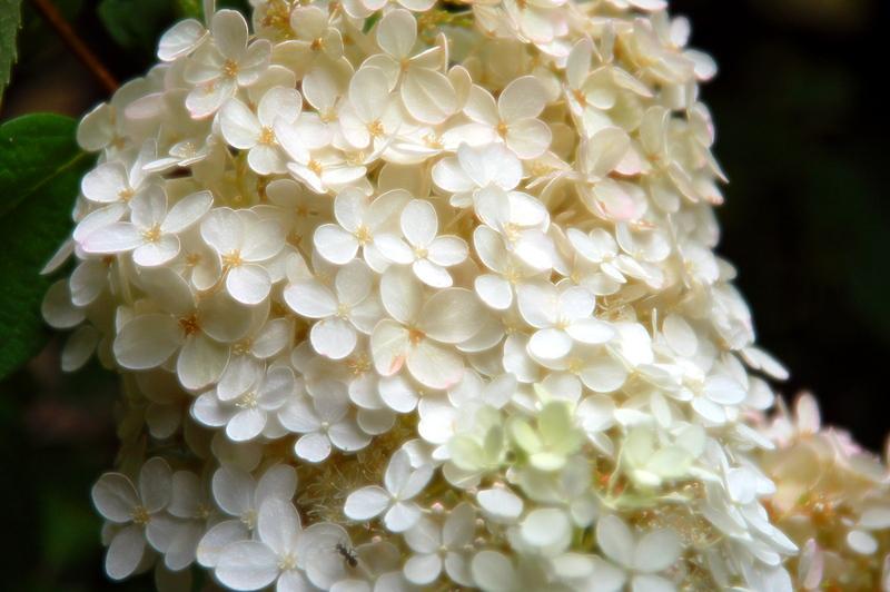 2008-09-23_Flowers_09_small.jpg