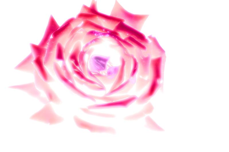 2008-09-23_Flowers_15_small.jpg