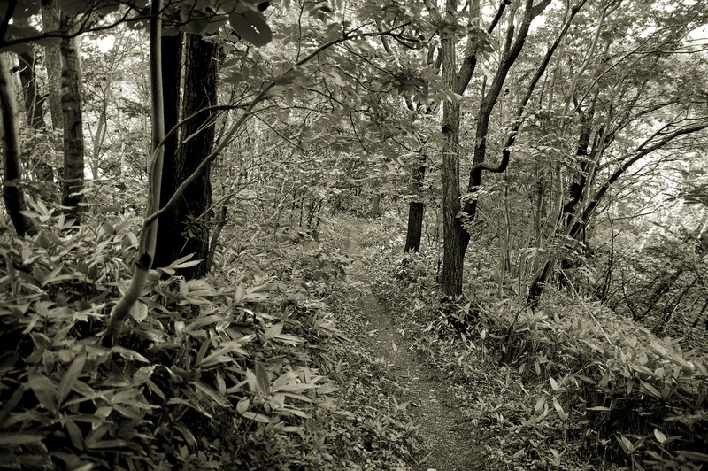 2008-09-23_Forest_07_small.jpg