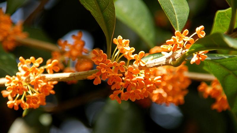 2009-02-07_Flowers_12_small.jpg
