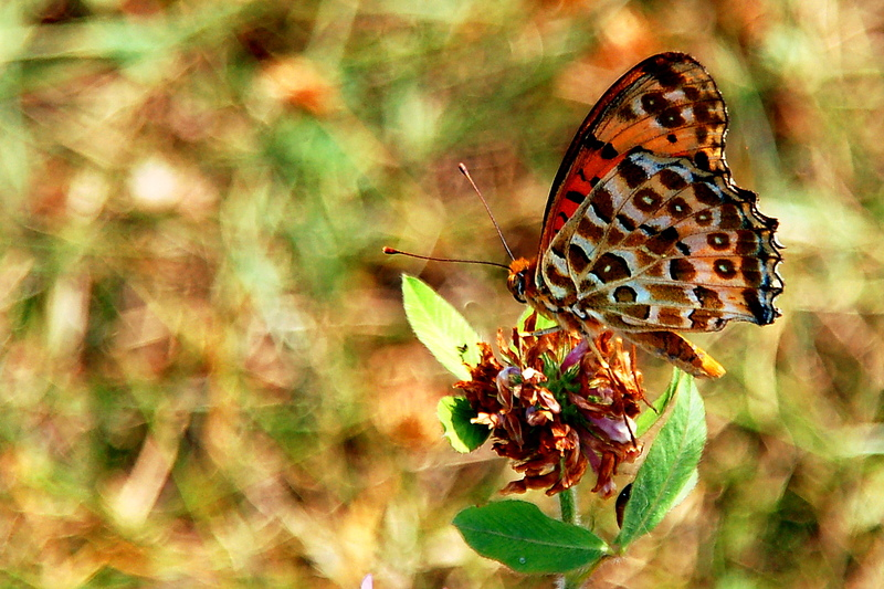 2009-02-07_Insects_Butterfly_1_small.jpg