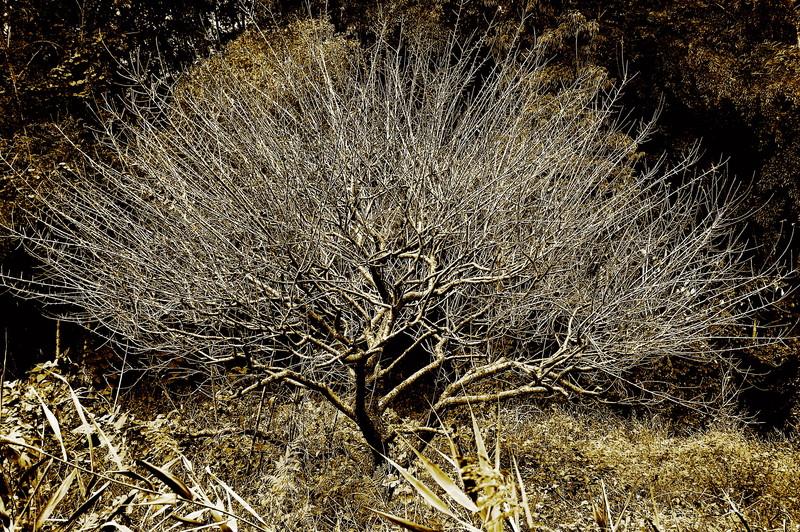 2009-02-07_Tree_small.jpg