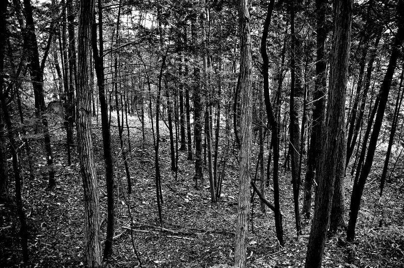 2009-02-07_Trees_06_small.jpg