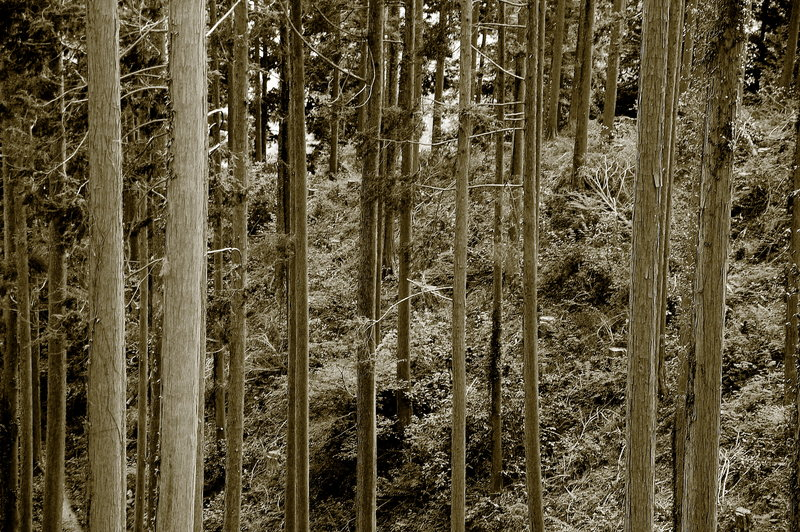 2009-02-07_Trees_Vertical_03_small.jpg